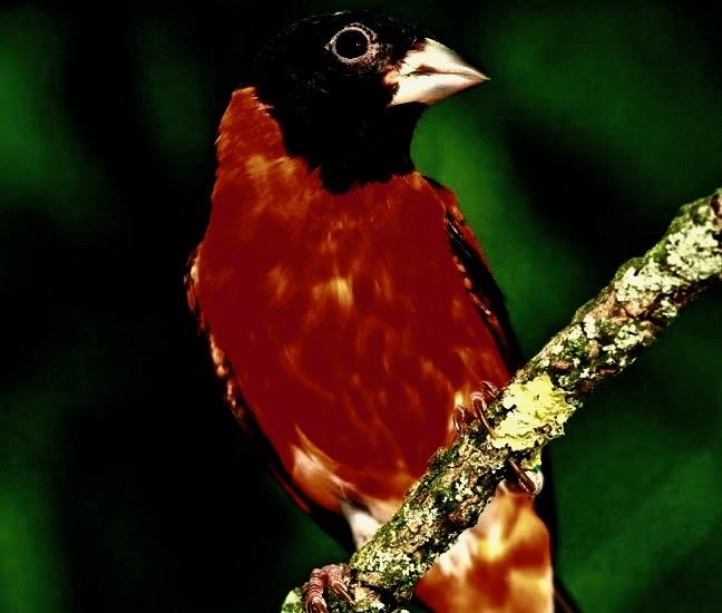 imagen-cardenalitas